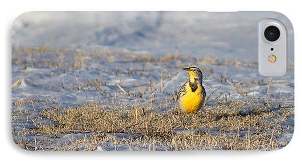 Western Meadowlark Phone Case by Alan Hutchins