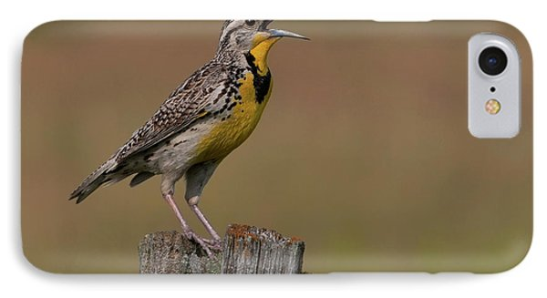 Western Meadowlark.. IPhone Case by Nina Stavlund