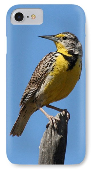 Western Meadowlark Perching IPhone 7 Case by Bob and Jan Shriner