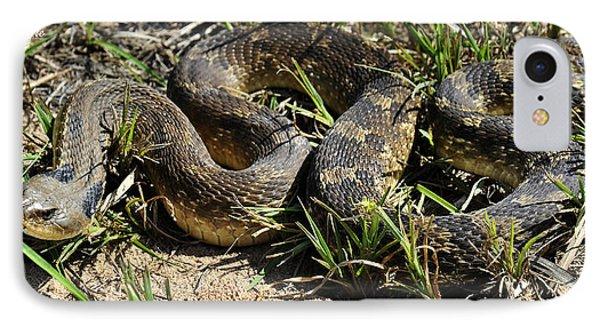 Western Plains Hognose Snake IPhone Case by Karen Slagle