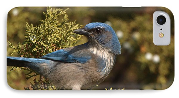 Western Scrub Jay IPhone Case by James Peterson