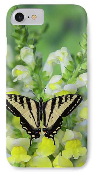 Western Tiger Swallowtail Butterfly IPhone Case