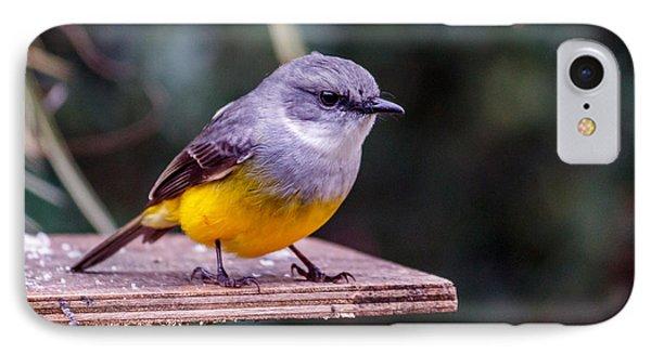 Western Yellow Robin IPhone Case