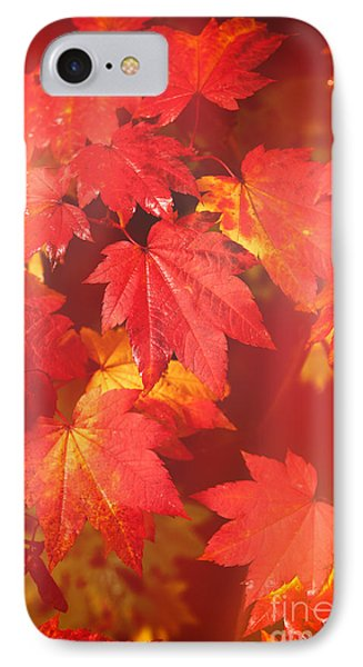 Westonbirt Arboretum Abstract IPhone Case