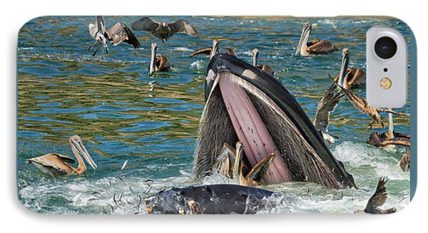 Whale Almost Eating A Pelican IPhone Case by Alice Cahill