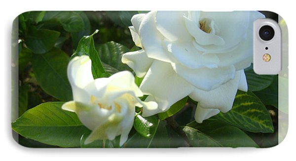 Whats So Special About White Flowers Phone Case by Ginny Schmidt