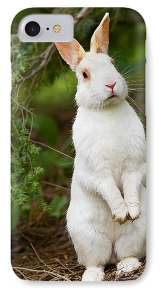 What's Up Doc IPhone Case by Bill Wakeley