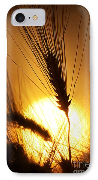 Wheat At Sunset Silhouette IPhone Case by Tim Gainey