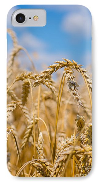 Wheat IPhone Case by Cheryl Baxter