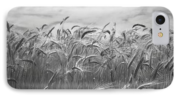 Wheat Crop Growing In A Field, Palouse IPhone Case by Panoramic Images