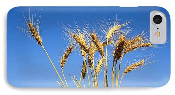 Wheat Stalks IPhone Case by Photostock-israel