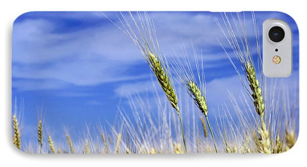 IPhone Case featuring the photograph Wheat Trio by Keith Armstrong
