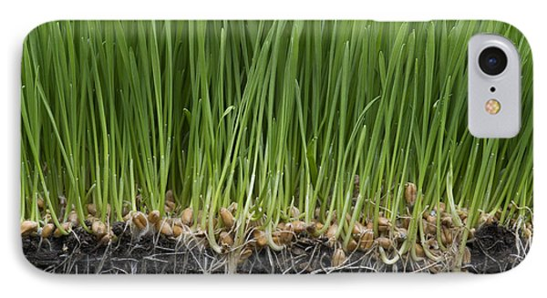 Wheatgrass IPhone Case