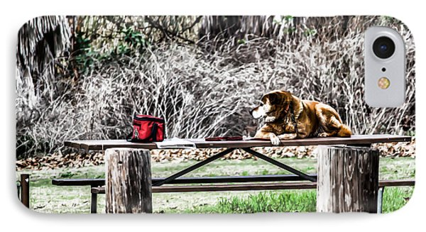 Where Is He Going? IPhone Case by Photographic Art by Russel Ray Photos