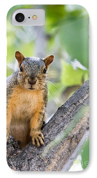 Where Is My Peanut IPhone Case by Robert Bales