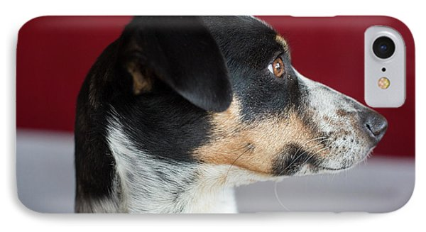 Whippet-jack Russell Terrier Cross-breed IPhone Case by Jim West