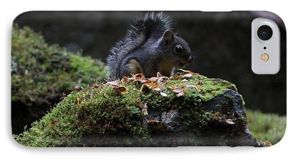 Whistler Squirrel IPhone Case by Amanda Holmes Tzafrir