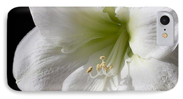 White Amaryllis Phone Case by Adam Romanowicz