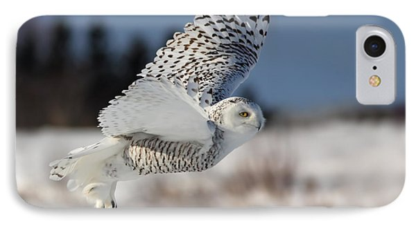 White Angel - Snowy Owl In Flight Phone Case by Mircea Costina Photography