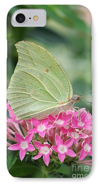 IPhone Case featuring the photograph White Angled Sulphur by Judy Whitton