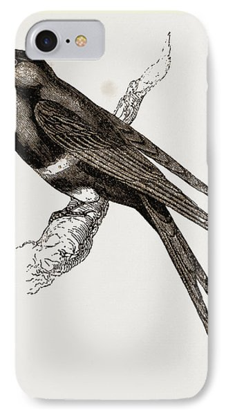 White-banded Swallow IPhone Case by Litz Collection