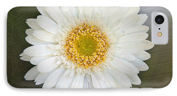 White Bergera Daisy 1 IPhone Case by Sally Simon