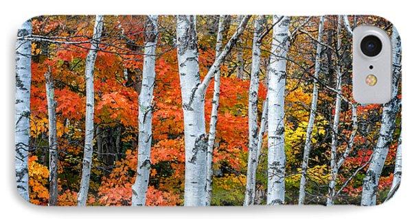 White Birch Forest - White Mountains IPhone Case
