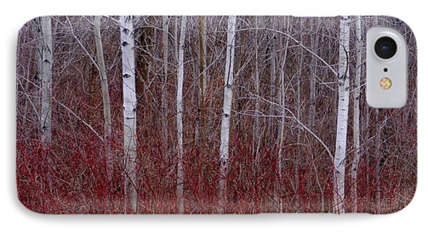 IPhone Case featuring the photograph White Birch In The Adirondacks by Karen Molenaar Terrell