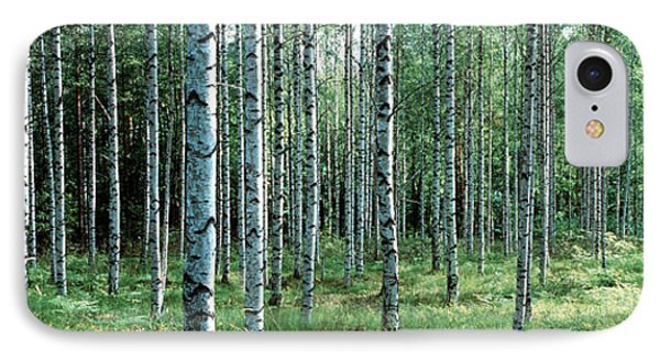 White Birches Aulanko National Park IPhone Case