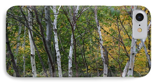 White Birches In The Woods IPhone Case by Denyse Duhaime