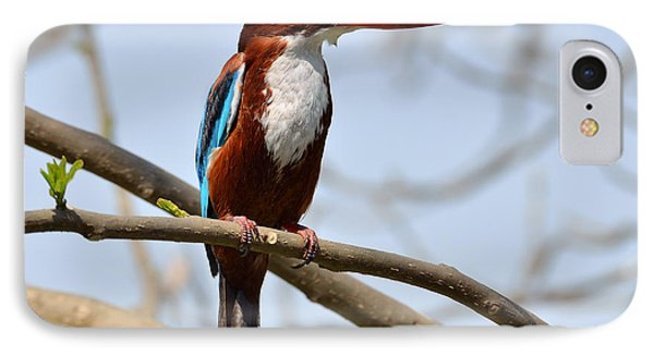 White Breasted Kingfisher IPhone Case by Fotosas Photography