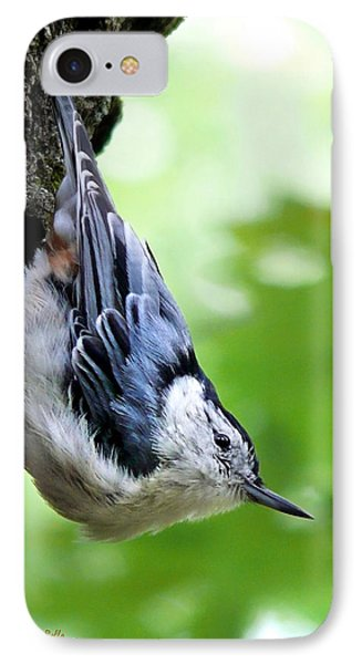 White Breasted Nuthatch IPhone Case by Christina Rollo