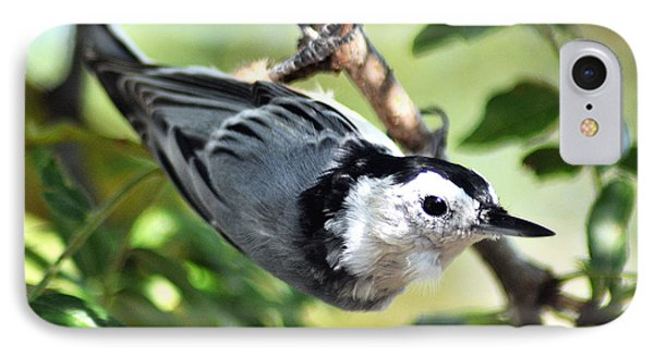 White Breasted Nuthatch IPhone Case