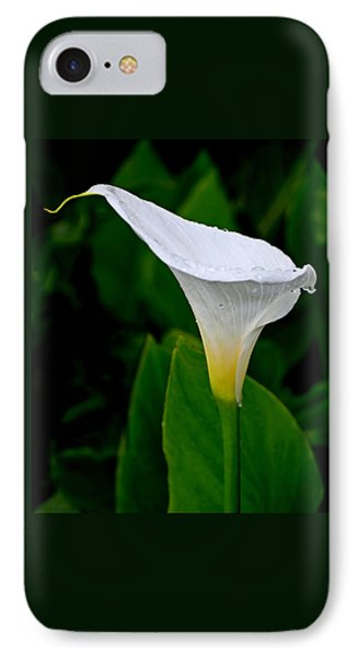 White Calla IPhone Case by Rona Black