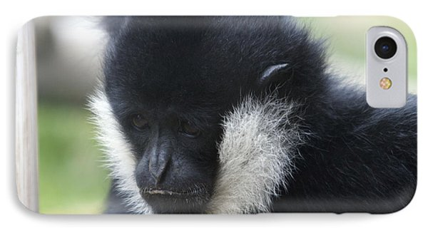 White-cheeked Gibbon - 0005 IPhone Case