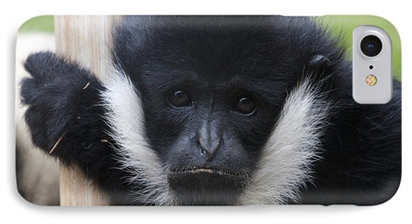 White-cheeked Gibbon - 0006 IPhone Case