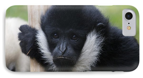 White-cheeked Gibbon - 0007 IPhone Case