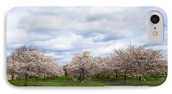 White Cherry Blossom Field In Maryland Phone Case by Susan Schmitz