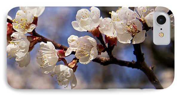 White Cherry Blossoms IPhone Case by Mary Lee Dereske