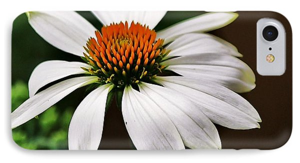 White Coneflower IPhone Case by Al Fritz