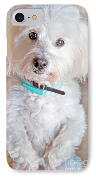 White Coton De Tulear Dog Standing Up IPhone Case by Valerie Garner