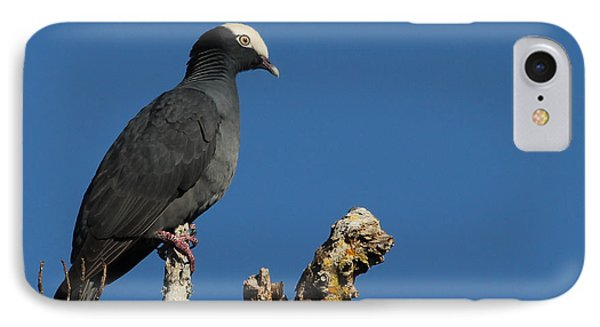 White-crowned Pigeon IPhone Case