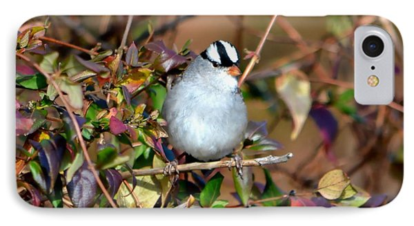 White Crowned Sparrow IPhone Case by Deena Stoddard