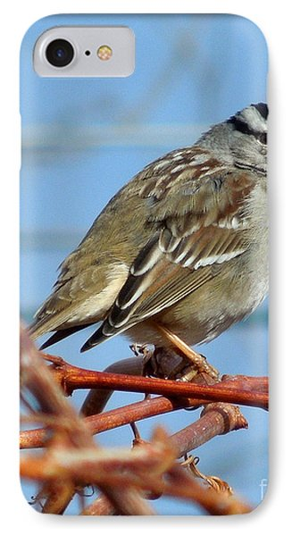 White Crowned Sparrow IPhone Case by Heidi Manly