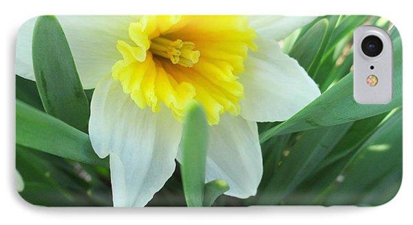 White Daffodil IPhone Case