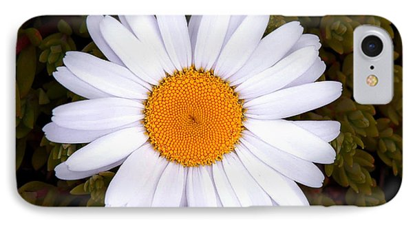 White Daisy In Bloom IPhone Case by Gary Slawsky