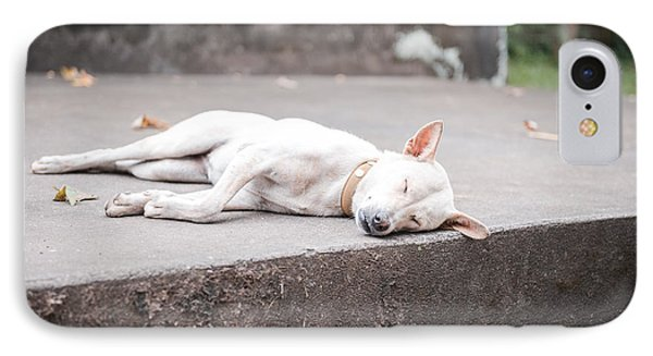 White Dog Sleeping IPhone Case