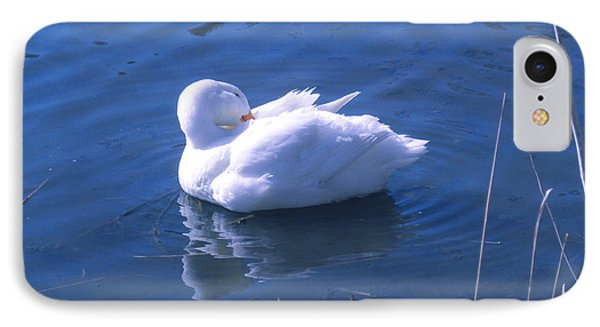 White Duck IPhone Case by David Klaboe