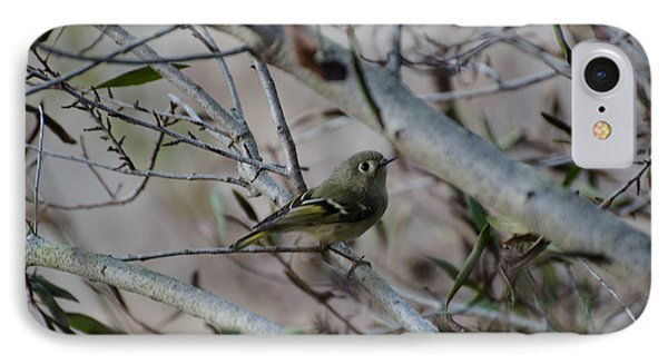 White-eyed Vireo IPhone Case by Donna Brown