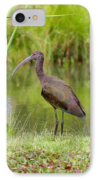 IPhone Case featuring the photograph White-faced Ibis 2 by Bob and Jan Shriner